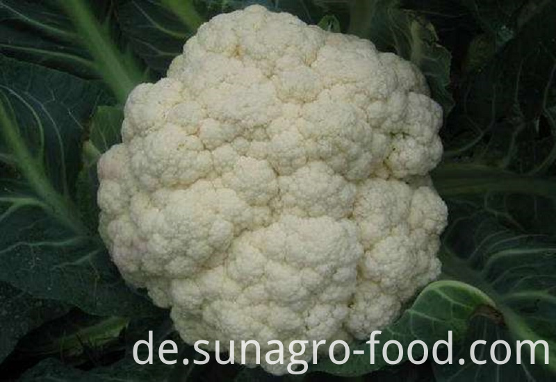 High-Quality Cauliflower Vegetables